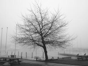 2017 Fotoklubben Peter Linnet, uden for konkurrence
